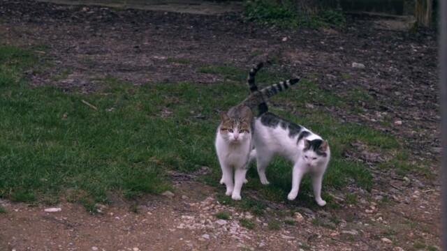 Животни, Странджа -  Това е България