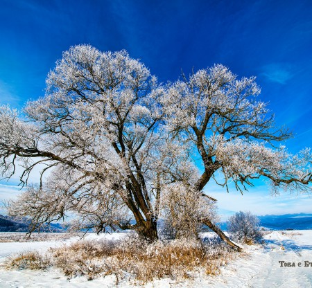 Зимно дърво – село Долно Камарци -  Това е България