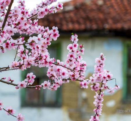 Пролет из Карловско -  Това е България