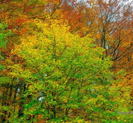 Есен из Петрохан -  Това е България