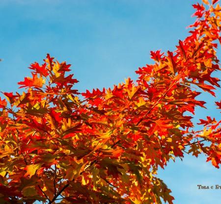 Есен из Балкана -  Това е България