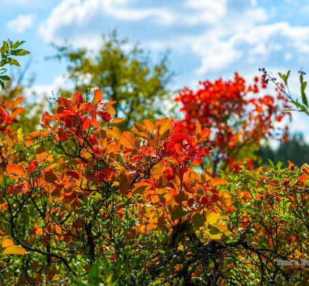 Есен край Вършец -  Това е България