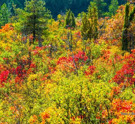 Есен из Берковския Балкан -  Това е България