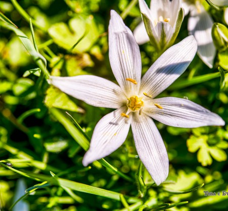 Горско цвете -  Това е България