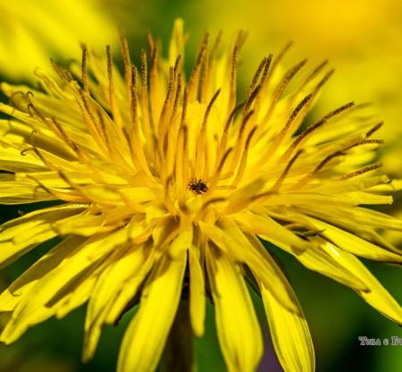 Пролетни цветя -  Това е България