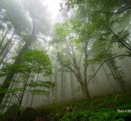 Резерват Джендема -  Това е България