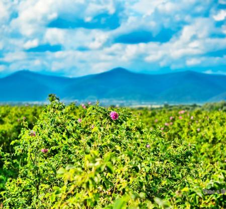 Розовата долина -  Това е България