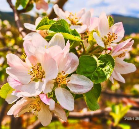 Пролетни цветове -  Това е България