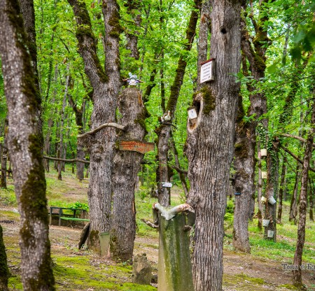 Природен парк Небесните пасбища – Осиковица -  Това е България