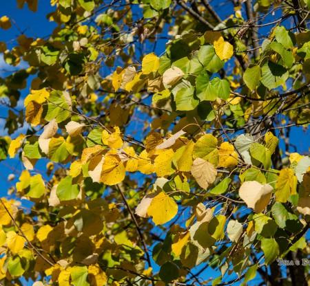 Есен из Правешкия Балкан -  Това е България