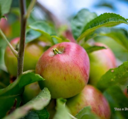 Есенни ябълки из Правешко -  Това е България