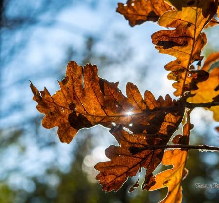 Есен в Правешкия Балкан -  Това е България