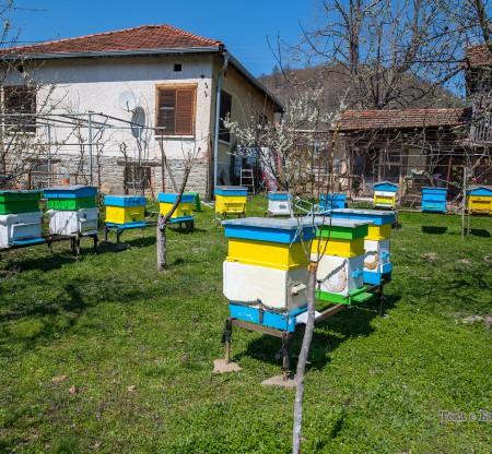 Пчелни кошери – Правешко -  Това е България