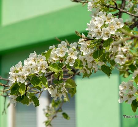 Село Своде -  Това е България