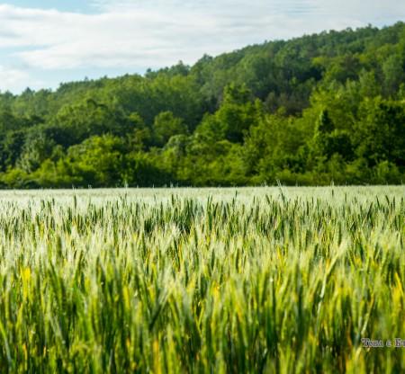 Поле край село Видраре -  Това е България