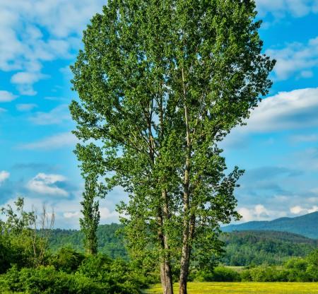 Поле край село Джурово -  Това е България