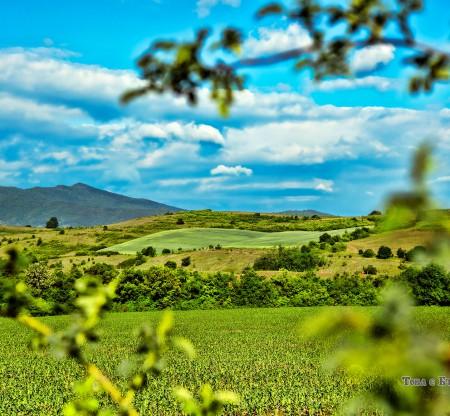 Поле край село Осиковица -  Това е България