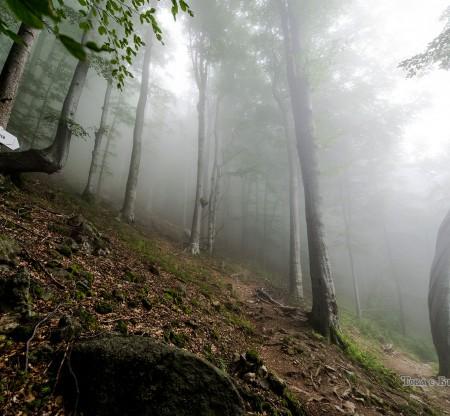 """Пътят към хижа """"Рай"""" -  Това е България"""