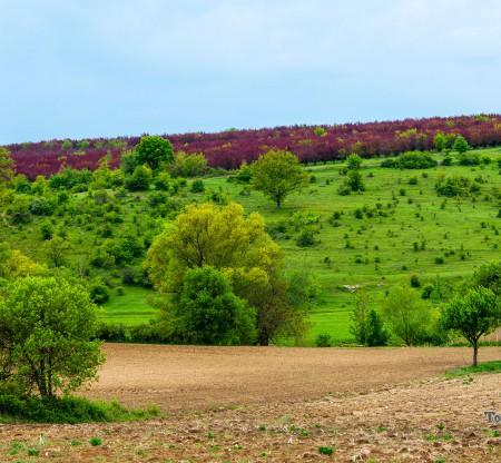 Село Ябълчево -  Това е България
