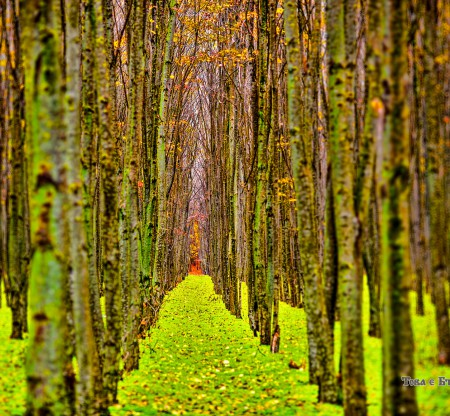 Гора в Добруджа – есен -  Това е България