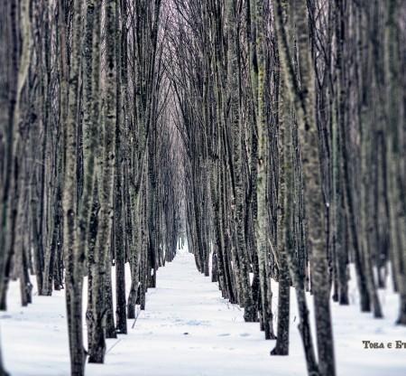 Гора в Добруджа – зима -  Това е България