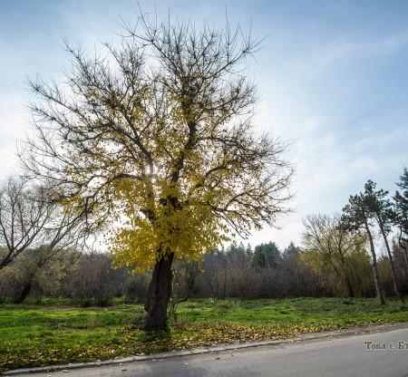 Парк в село Красен -  Това е България