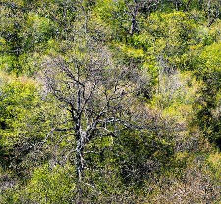 Природен парк Странджа -  Това е България