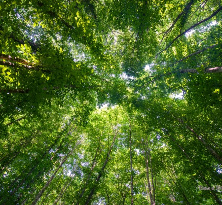 Биосферен резерват Узунбуджак – Странджа -  Това е България