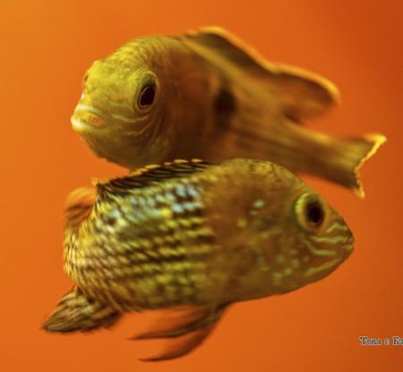 Варненски аквариум -  Това е България