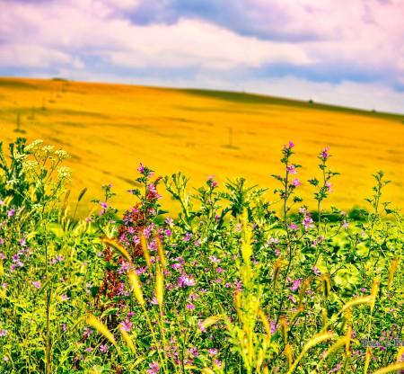 Мизийски пейзаж -  Това е България