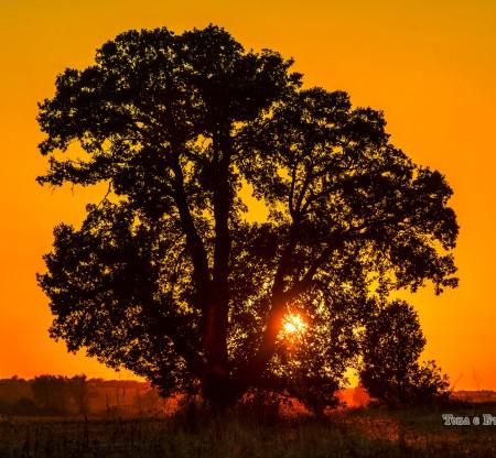 Дърво край Бяла Слатина -  Това е България