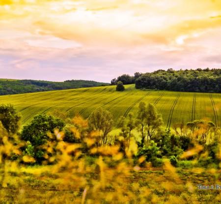 Хълмисти поля край град Кула -  Това е България
