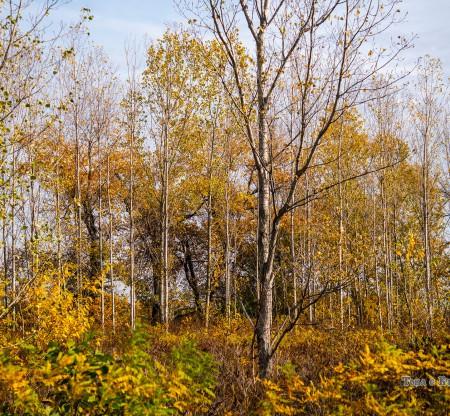 Крайдунавска горичка -  Това е България