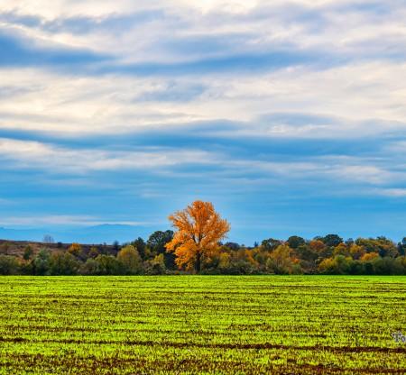 Мизийско есенно поле -  Това е България