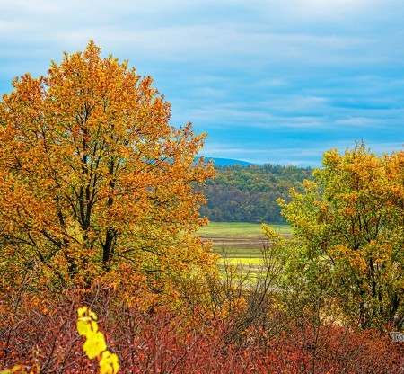 Есен из Мизия -  Това е България