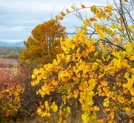 Есен в Мизия -  Това е България