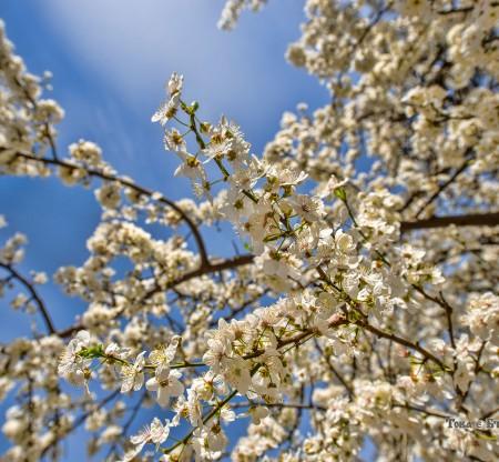 """Пролет в Бачковски манастир """"Успение Богородично"""" -  Това е България"""