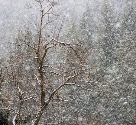 Родопска зима -  Това е България