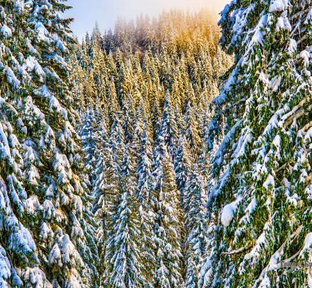 Зима край Пампорово -  Това е България