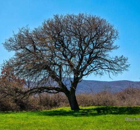 Родопска пролет -  Това е България