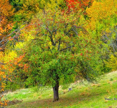 Родопска есен – село Чокманово -  Това е България