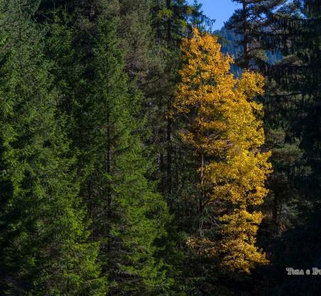 Родопска есен край село Мугла -  Това е България