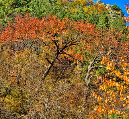 Родопска есен по пътя към село Турян -  Това е България