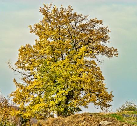 Есен в село Кьосево -  Това е България