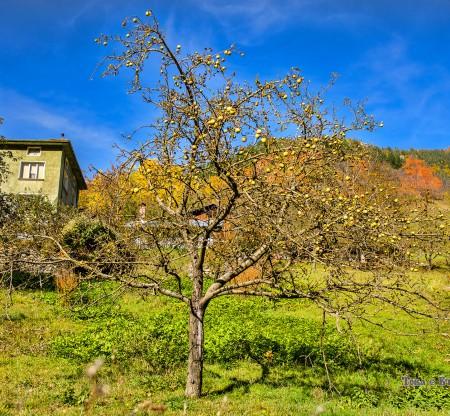 Есенна градина в Родопите -  Това е България