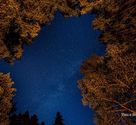 Нощем из Алиботуш -  Това е България