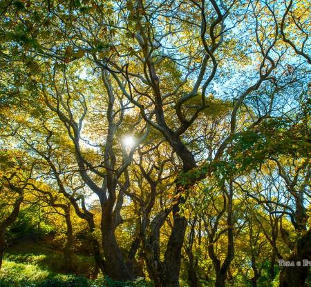 Есен в Малешевска планина -  Това е България