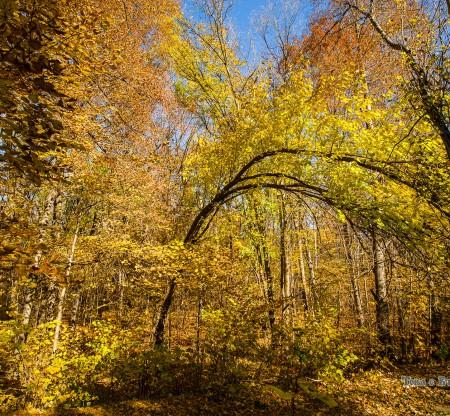 Северен парк – София -  Това е България