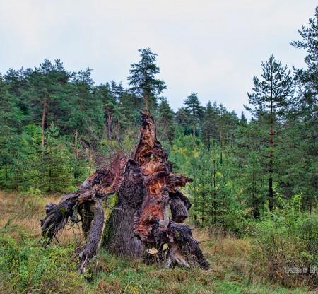 Планина Верила -  Това е България